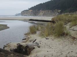 Oregon Coast 007