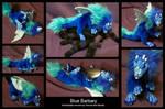 Blue Barbary Whelp
