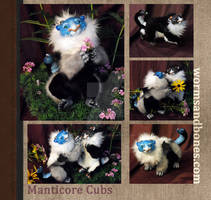 Maticore Cubs