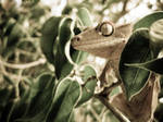 Crested Gecko in Tree