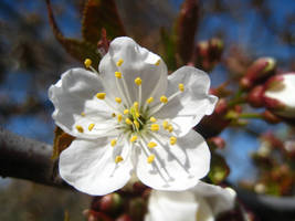 Spring is in the air V by merigiros