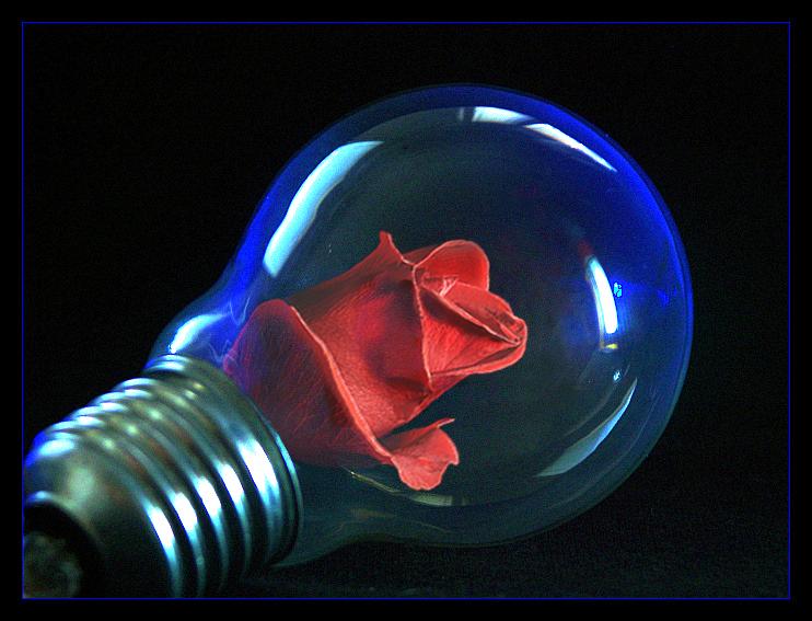 rose in a light bulb by bedzki on deviantart