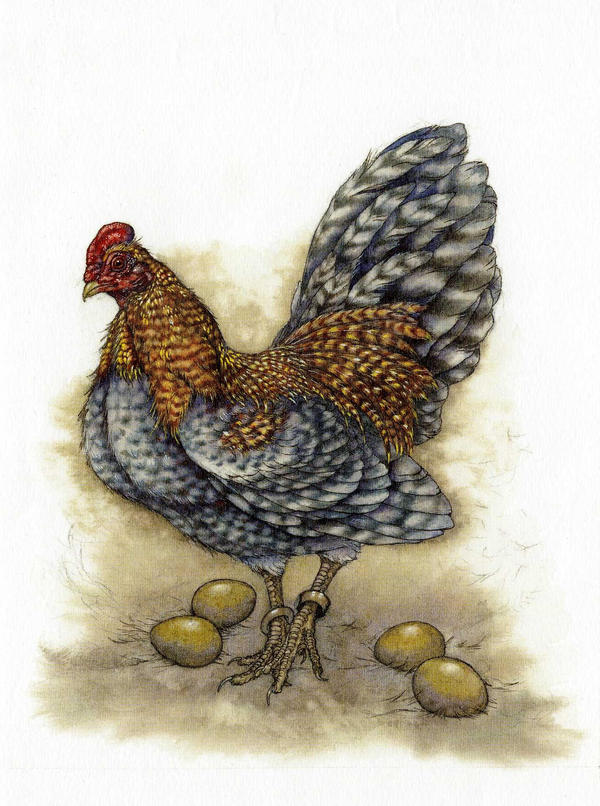 The Hen by Himmapaan