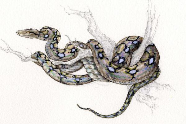 Python drawing - photo#12