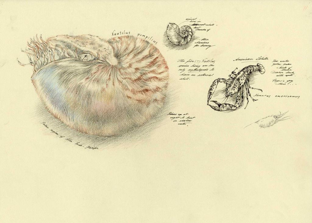 Nautilus by Himmapaan