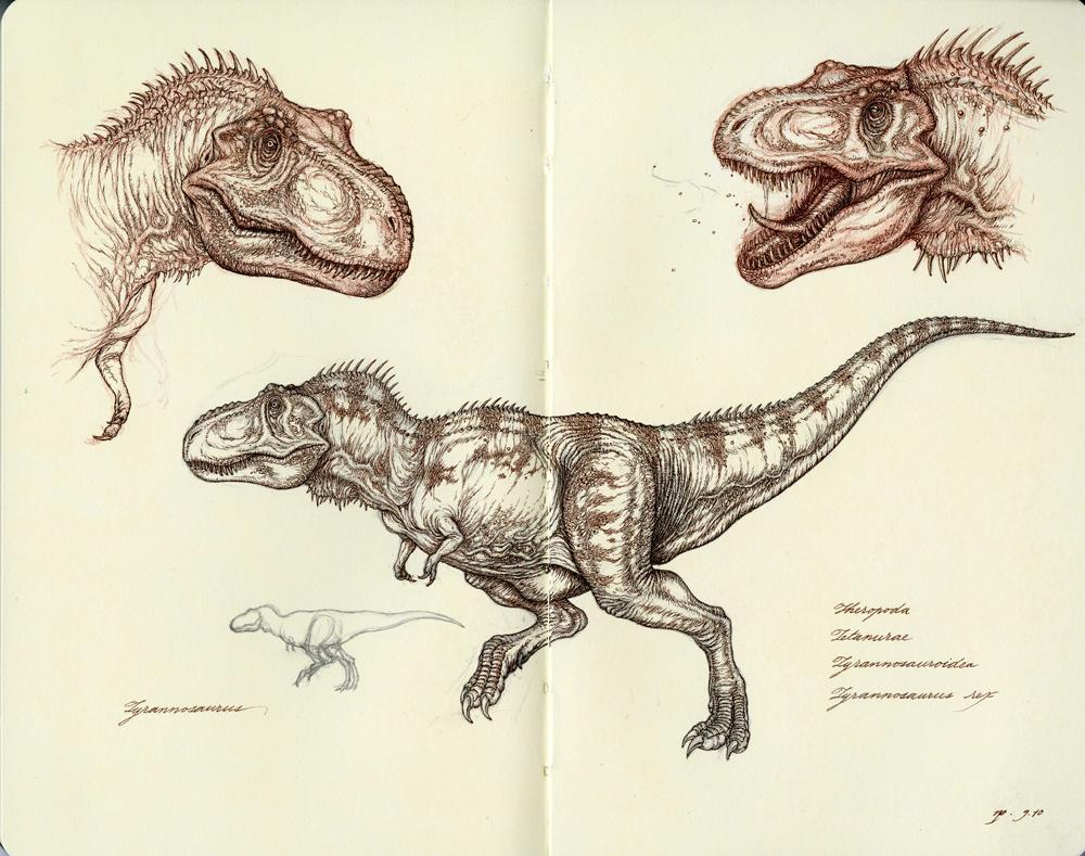 Tyrannosaurus Studies by Himmapaan