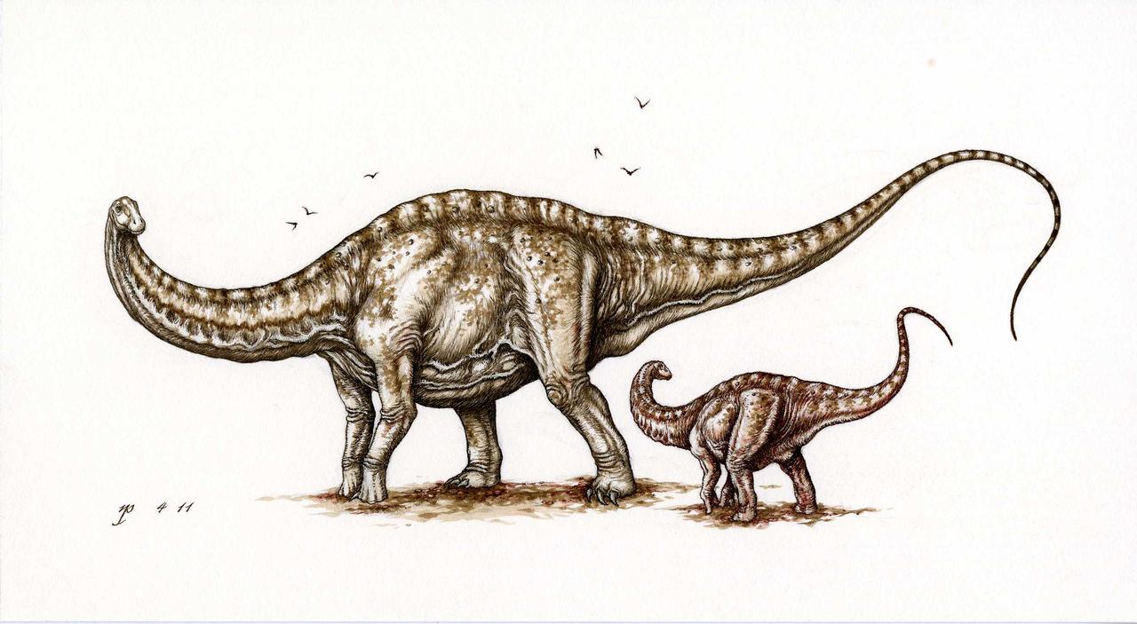 Apatosaurus by Himmapaan