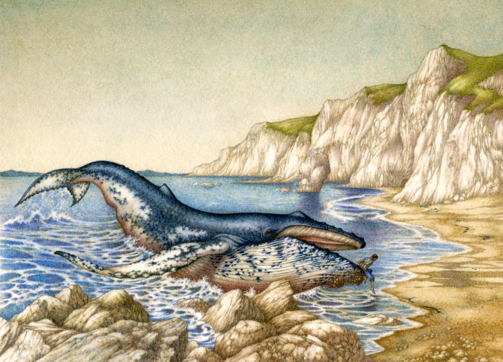 How the Whale got his Throat by Himmapaan