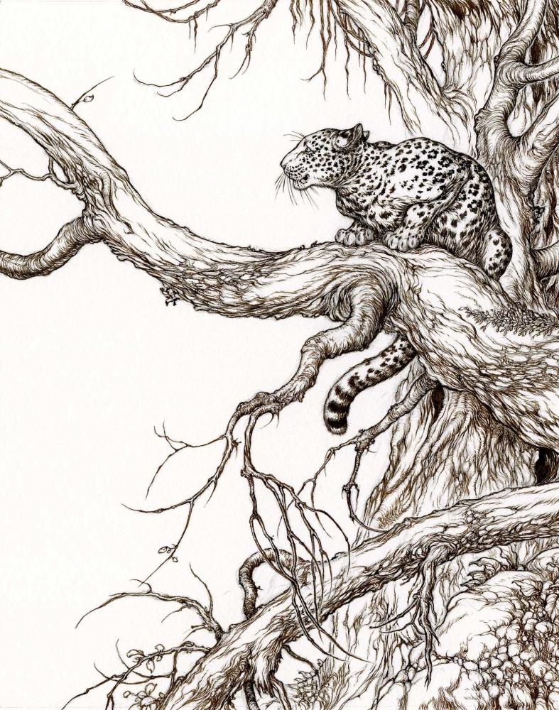 Leopard by Himmapaan