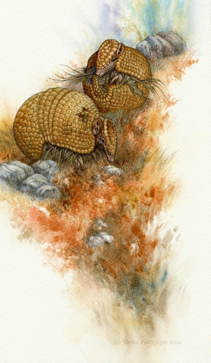 The Beginning of the Armadillos by Himmapaan