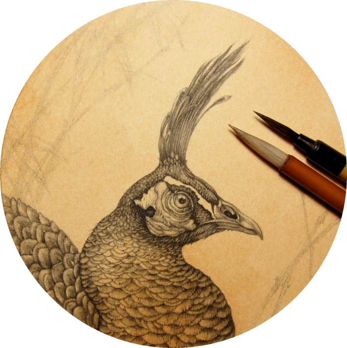 Peafowl Head Progress by Himmapaan
