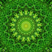 Green Explosion by Jakeukalane