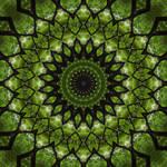 Elemental Mandala: Trees!