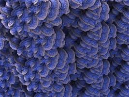 Fractal Coral by Jakeukalane