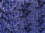 Fractal Coral