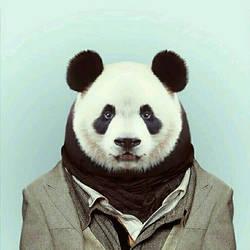 Classy as PANDA