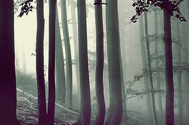 misty forest by linde-lu