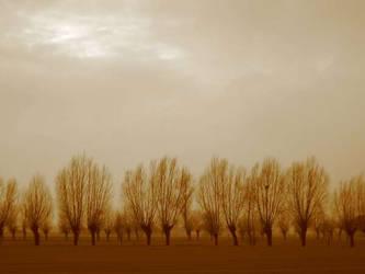 Trees of the Veneto