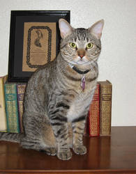 Torre the Intellectual Tabby