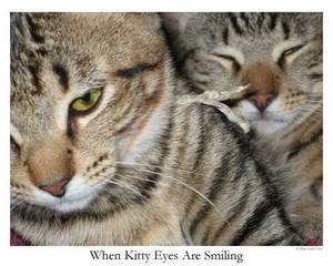 When Kitty Eyes Are Smiling