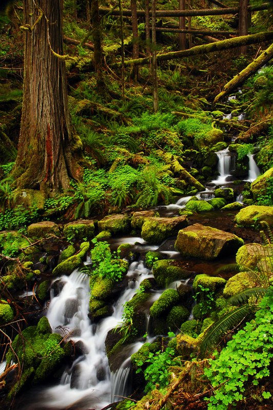 Clackamas River Trail by greglief
