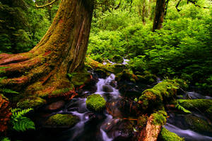 Wahkeena Springs by greglief