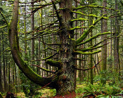 Tentacle Tree by greglief