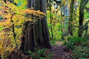 Autumn - Salmon River Trail by greglief