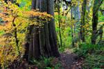 Autumn - Salmon River Trail