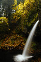 Ponytail Falls Autumn Study 2 by greglief