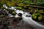 Mineral Creek, Study 1