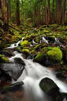 Sol Duc Falls Trail, Study 1 by greglief