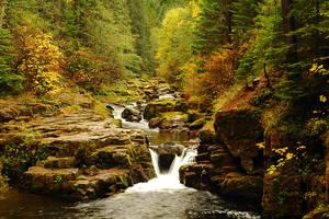 Brice Creek, Autumn Study by greglief