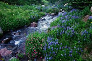 Elk Cove Creek, 2007-1A by greglief