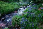 Elk Cove Creek, 2007-1A