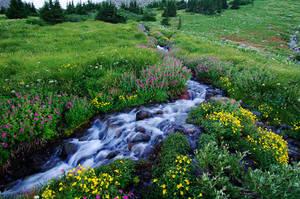 Elk Cove Creek, 2007-10 by greglief