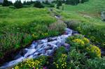 Elk Cove Creek, 2007-10