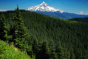 Mount Hood from Anthill Trail by greglief