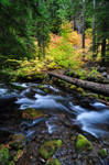 Cold Spring Creek Study 2011 #1