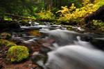 Cold Spring Creek Study 2011 #2