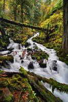 Wahkeena Creek, Fall Study 2016
