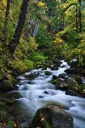 Multnomah Creek, Fall Study 2016