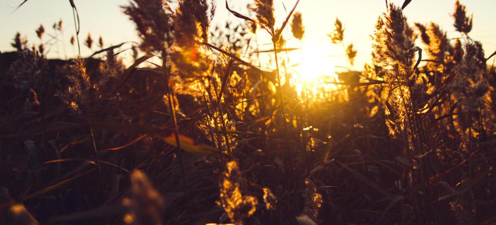 Sunset Weeds by hmcindie
