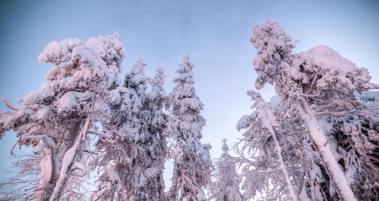 Skulls in the snows by hmcindie
