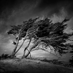 Wind And Wuthering I by Pixydream