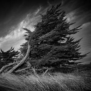 Wind And Wuthering IV