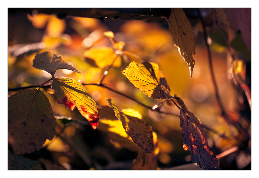 Autumn in Leaves by ReneAigner