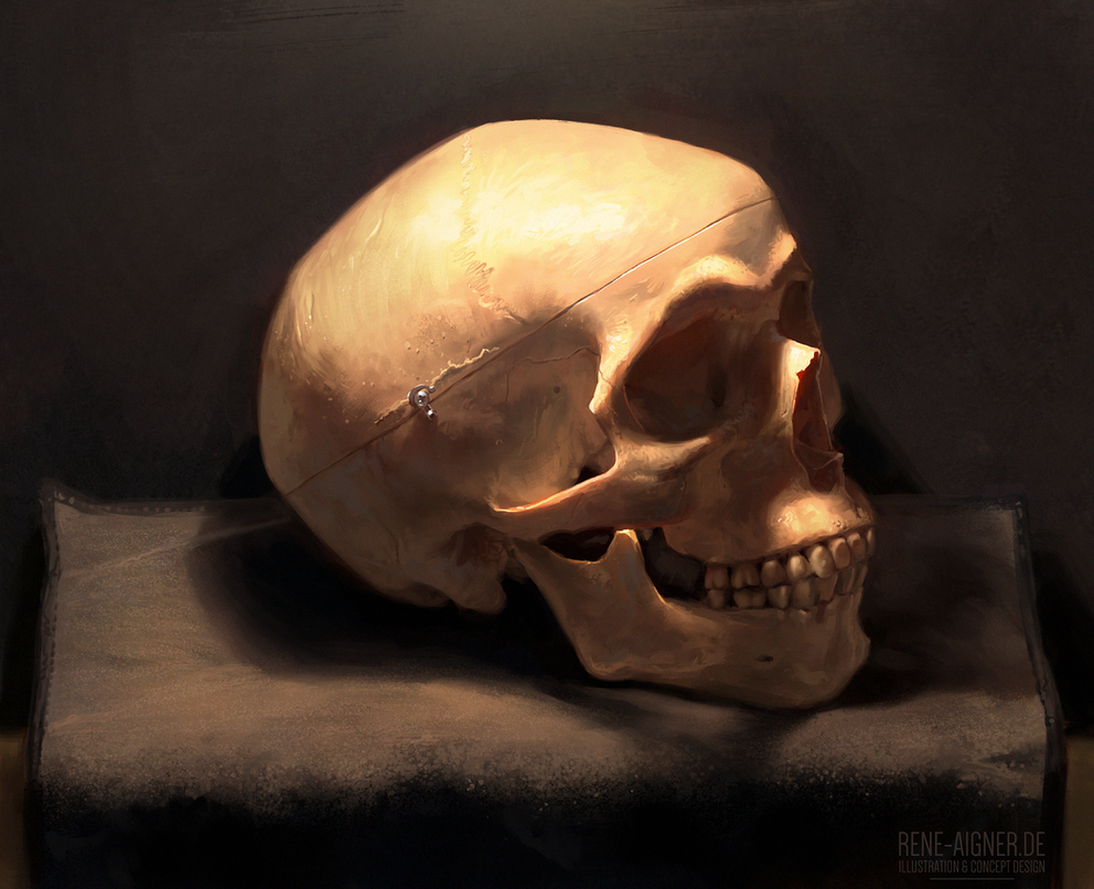 Skull Study from Life by ReneAigner
