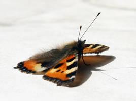 Butterfly in the sun.