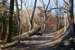 Woodland Shadows